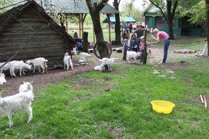 Viva Sol ožkų ūkis